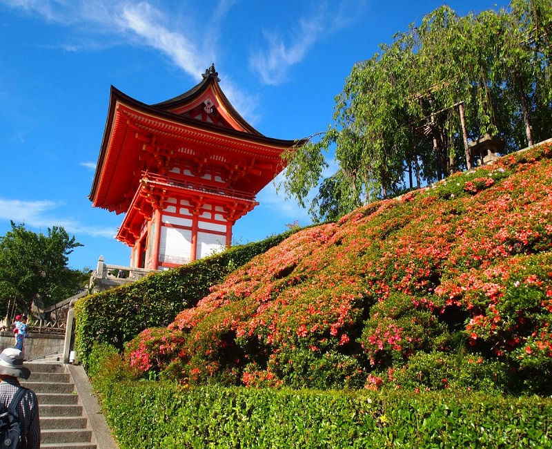 image of blue sky and flowers surround a Pagoda in Japan